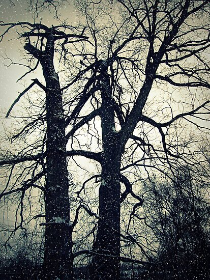 Snow Trees by Susan S. Kline