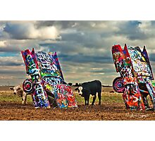 Cadillac Cows Photographic Print