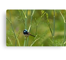 On the fennel Canvas Print