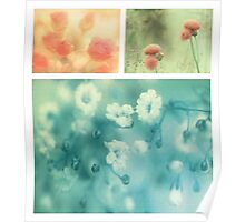 Collection ~ Flowers Poster