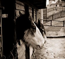 Horses set in 1800's style stables by melissagavin