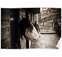 Horses set in 1800's style stables Poster