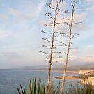 Peyia Bay, Cyprus, with Aloe Vera by physiognomic