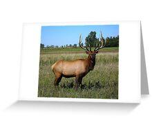Bull Elk ! Greeting Card