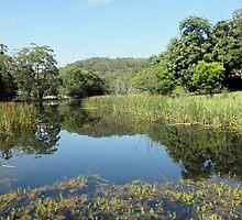 Audley, Royal National Park, Sydney, NSW, Australia. by kaysharp