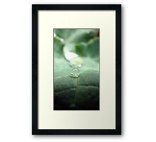 Droplet - Buxton (Victoria) Framed Print