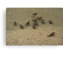eleven sparrows  Canvas Print