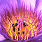 Featured Flowers Winner - Nicole Besch