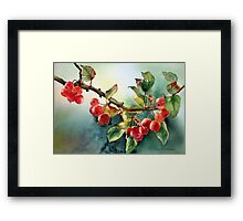 Crab apples after rain Framed Print
