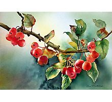 Crab apples after rain Photographic Print