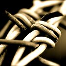 bard wire by perfectdaypro