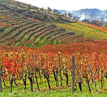 Vineyards on fire by didi24