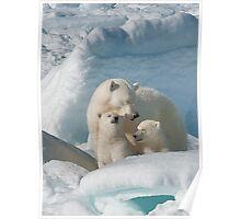 Sleepy Polar Bear Mom With Cubs Poster