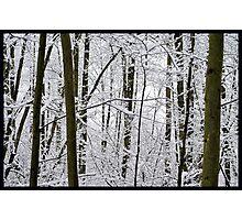Snow Trees Photographic Print