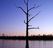 West Landing Marina Tree by crystalseye