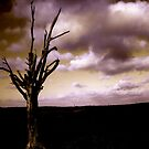 Lighting Tree 2 by perfectdaypro