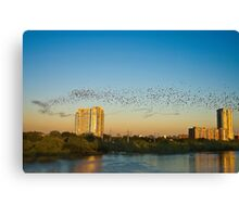 Black Ribbon - The Austin Bats Canvas Print