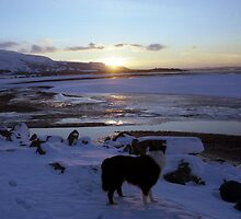 Sunset Snow with Indy by Michael Haslam