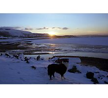 Sunset Snow with Indy Photographic Print