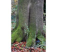 Colourful Tree Photographic Print