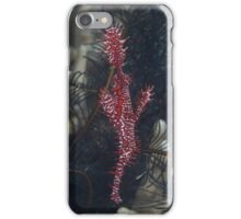 Ornate Ghost Pipefish iPhone Case/Skin