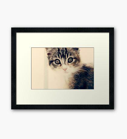 Loveable Mallory Framed Print