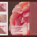 Happy Valentine's day - Pink rose - card by steppeland