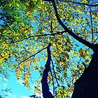 A Distinctly Vibrant,  & Sprightly Tree by DansDebouquer