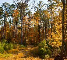 Autumn Trail by crystalseye