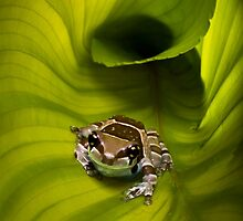 Escaping the Hosta by Brian Avery