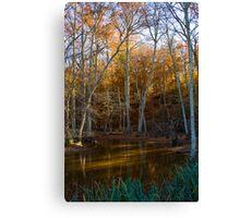 Autumn Swamp Canvas Print