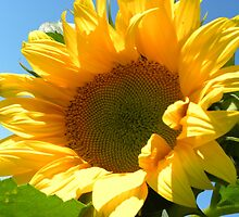 Sunny Sunflower by Tjfarthing