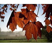 Leaves of Fate Photographic Print