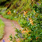 Flowered Footpath by John Butler