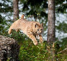 Flying Bobcat by J. Day