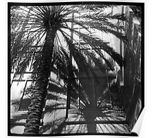 Palm Shadows Poster