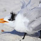 Tern Talk by Renee Blake