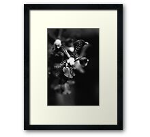 Orchid Essence  Framed Print