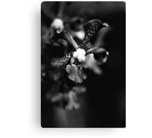 Orchid Essence  Canvas Print