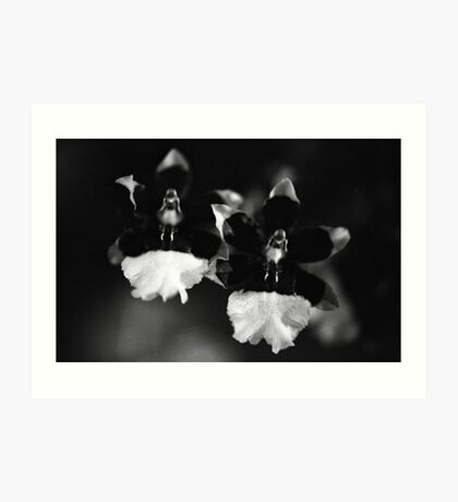 The Orchid Twins Art Print