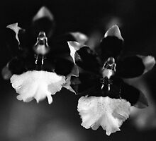 The Orchid Twins by AnalogSoulPhoto