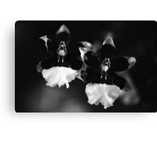 The Orchid Twins Canvas Print