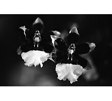 The Orchid Twins Photographic Print