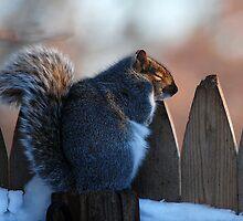 Sleepy Little Squirrel by Kathleen Small Wilkie