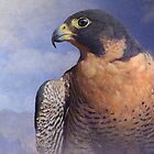 peregrin falcon study by R Christopher  Vest