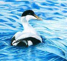 Eider Duck by Redbarron