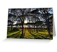 Umbrella pine trees in Strofylia forest Greeting Card