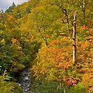 Autumn treescape, Japan Alps, Japan. by johnrf