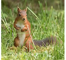 Squirrel in the grass Photographic Print