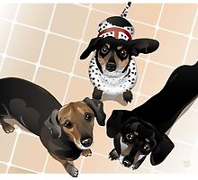 Doxies by AdamPate